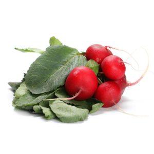 Radis Rouge Alsace propre récolte