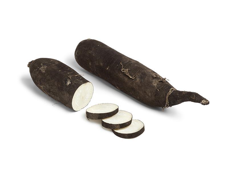 Radis Noir Long Alsace propre récolte