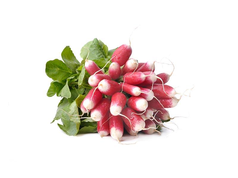 Radis Rose et Blanc Alsace propre récolte