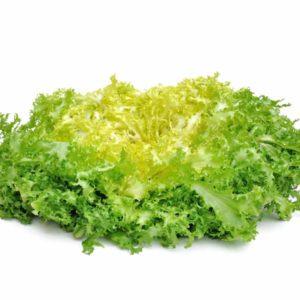 Salade Frisée Grosse