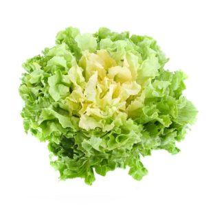 Salade Scarole Alsace propre récolte